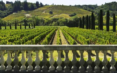 Helpful Ideas for Planning a Family Vacation in Napa Valley